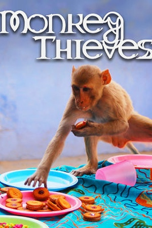 Monkey Theives
