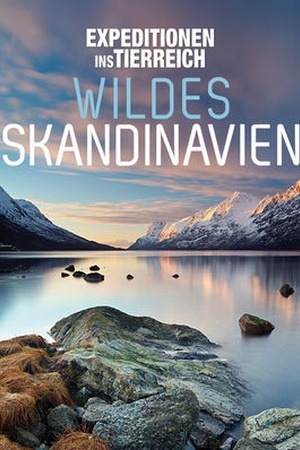 Expeditionen ins Tierreich: Wildes Skandinavien