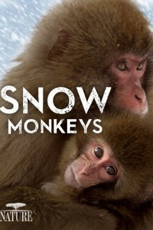 Nature: Snow Monkeys