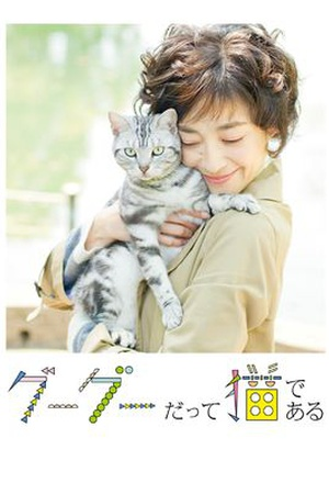 Gou-Gou: My Love, My Cat
