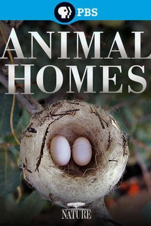 Nature: Animal Homes