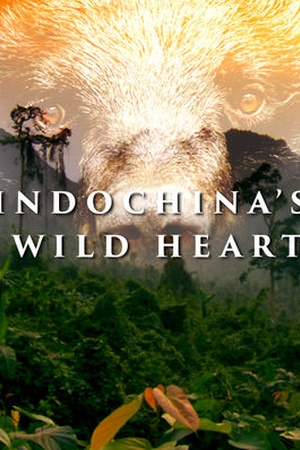 Indochina's Wild Heart