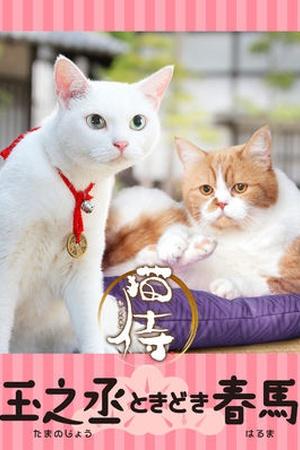 Samurai Cat: Tamanojyo Tokidoki Haruma