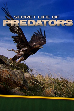 Secret Life of Predators
