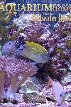 Aquarium for Your Home: Saltwater Reef
